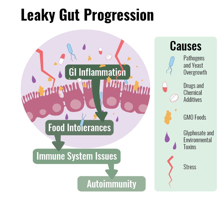 Leaky Gut Syndrome Progression